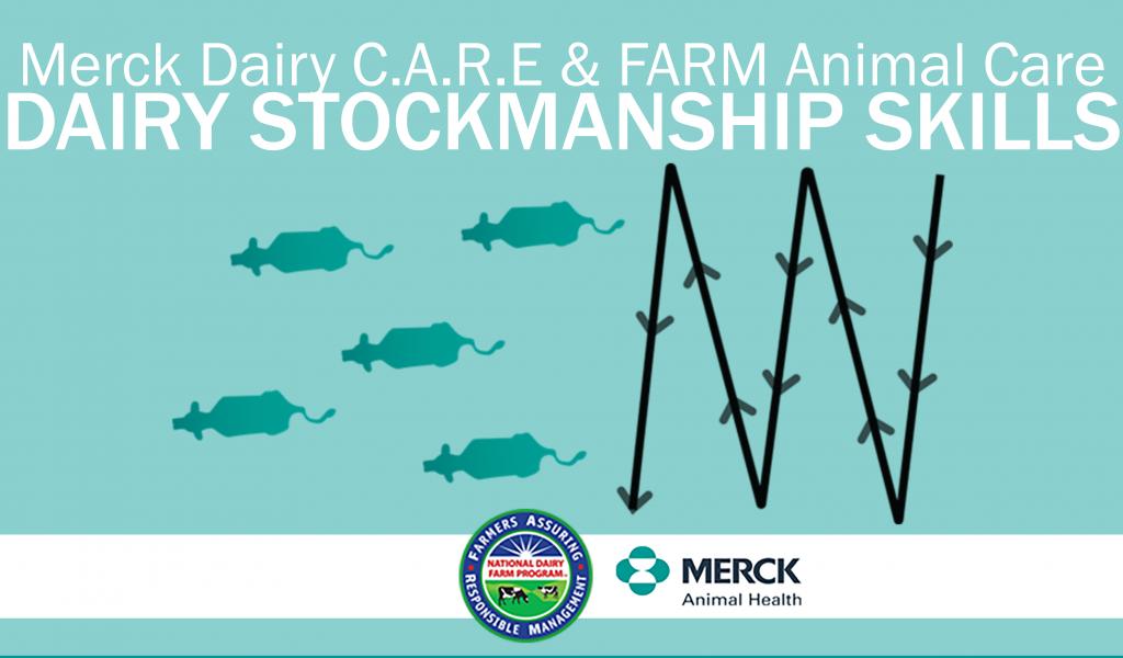 WEBINAR RECAP: Dairy Stockmanship Skills